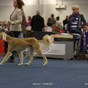 CACIB 10/05/2014 Dortmund Germany DOG Show International- FOTO SALUKI