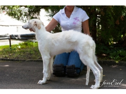 Male Fonezel Altai, 3 month