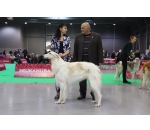 International Dog Shows 30.11.-01.12.2019 2*CACIB Prague