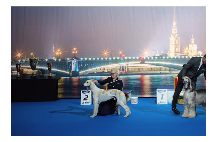 Belye Nochi International Dog Show CACIB FCI 29-30.06.2019 Saint-Petersburg