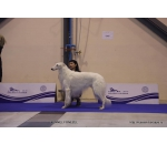 2*CACIB 18-19/01/2020 2* Slovenia Internatiional Dog Show Celje